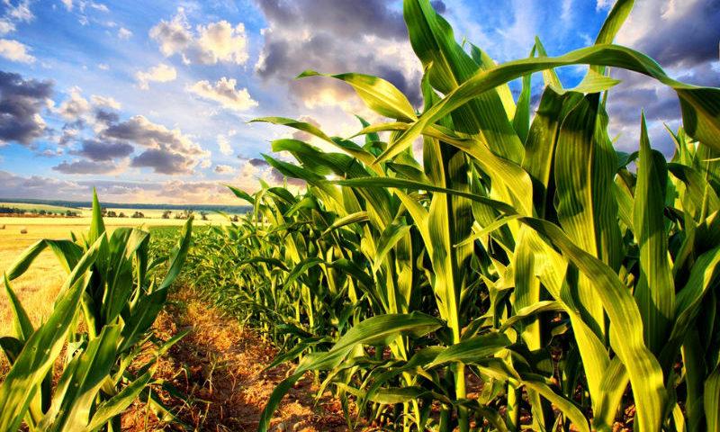 agricultura-de-precisao-e-suas-vantagens