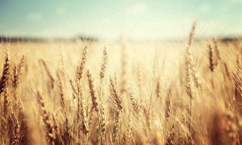 culturas-de-inverno-para-evitar-plantas-daninhas-no-mato-grosso-do-sul-1-